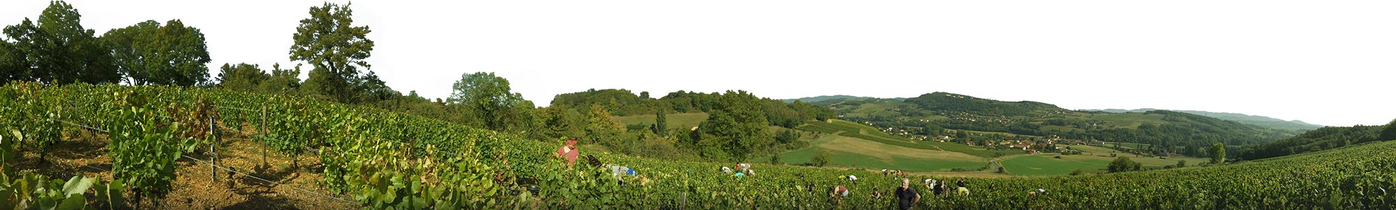 Photo du Domaine Chasselay, vins du Beaujolais